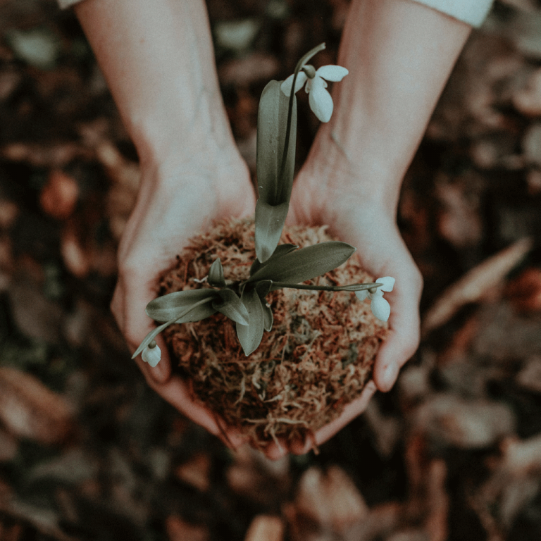 Image of hands holding soil with a flower in it