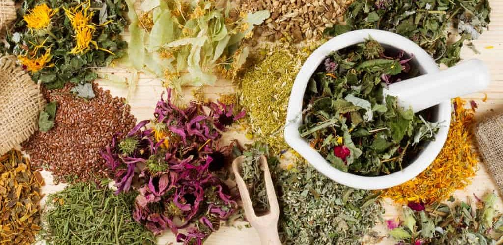 Dublin Herbalist herbal medicine healing herbs and nutritional plants